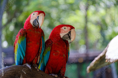 Two parrots on branch.