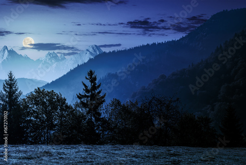 Foto op Canvas Nachtblauw Forest on the hillside in High Tatras at night