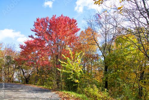 Spoed canvasdoek 2cm dik Canada Autumn foliage in Montreal, Canada