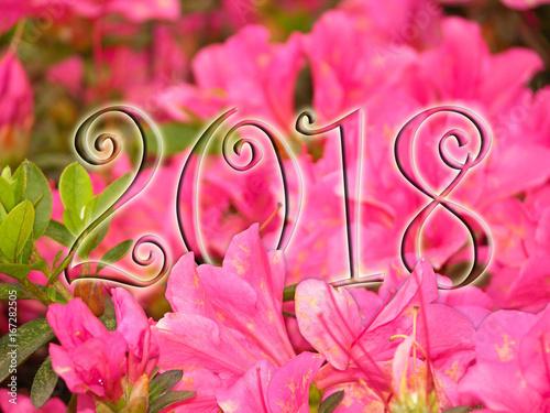 Aluminium Azalea 2018 full of flowers A