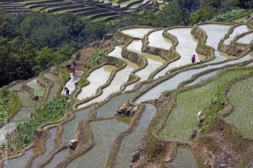 Yuanyang Rice Terraces, Yunnan - China