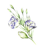 Composition with eustoma. Hand draw watercolor illustration. - 167289957