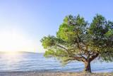 Lonely drzewa na plaży o zachodzie słońca.