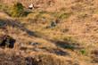 Farming Family Labor, Hand-Cutting Grass on Steep Hillside
