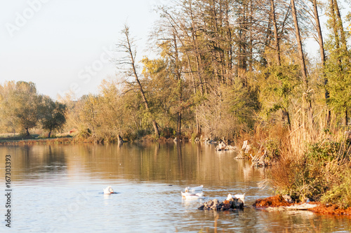 Foto op Canvas Wit Autumn landscape with water and reflexions