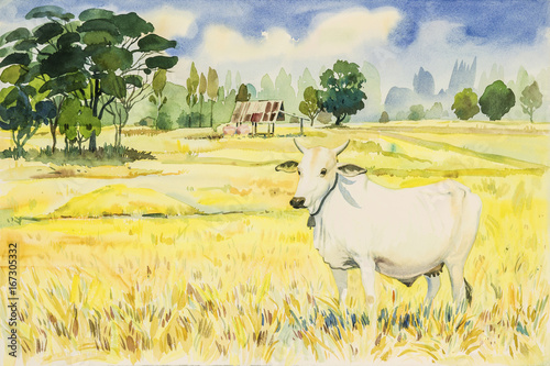 Staande foto Zwavel geel Watercolor landscape painting colorful of rice fird and cow