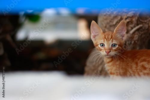 One kitten on the garden .