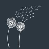 Dandelion blowing silhouette
