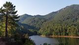 Forêt et lac de Sampolo en Corse