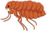Cartoon flea isolated on white background