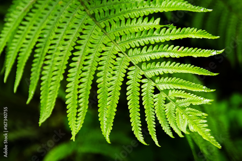 The top view on the green leaf of fern on a black-green background. - 167340755