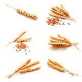 Collection of photos wheat ears and seed isolated - 167344905