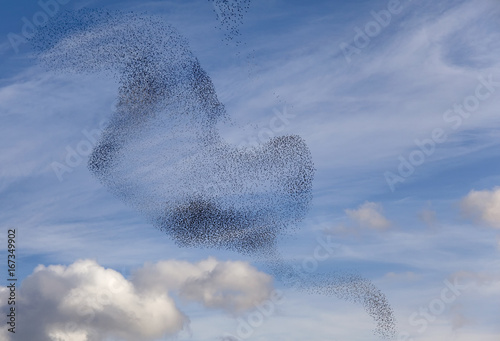 Leinwanddruck Bild Tanz der Vögel