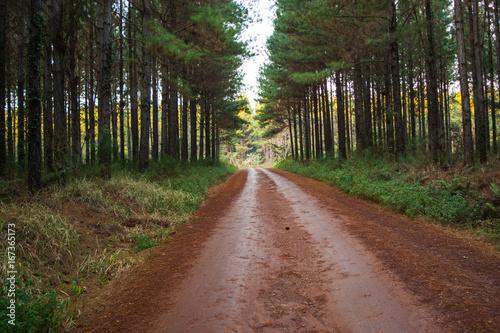 Foto op Canvas Weg in bos Paisajes con caminos