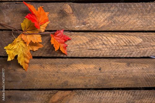 Bunte Herbstblätter - 167399777