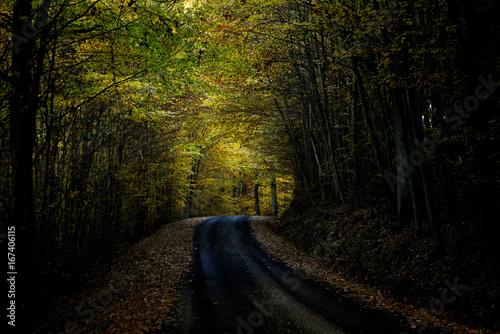 Papiers peints Route dans la forêt dunkler Herbstwald