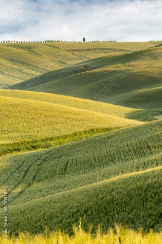 Poster Toscane Rolling hills of Tuscany