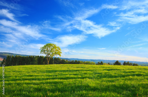 pojedyncze-drzewa-i-blekitne-niebo