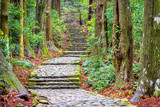 The Kumano Kodo trail, a sacred trail in Nachi, Wakayama, Japan.