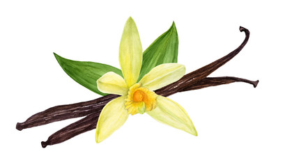 Vanilla pods with flower and leaves. Vanilla sticks. Watercolor hand-drawn illustration. © Irina Violet