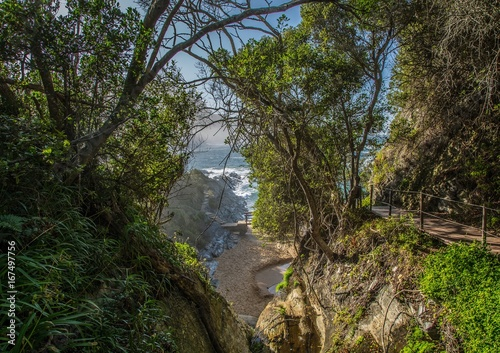 Foto op Canvas Zwart Rain Forest on part of the Otter Trail at the Indian Ocean