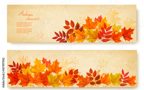 Set of two nature banners with colorful autumn leaves. vector
