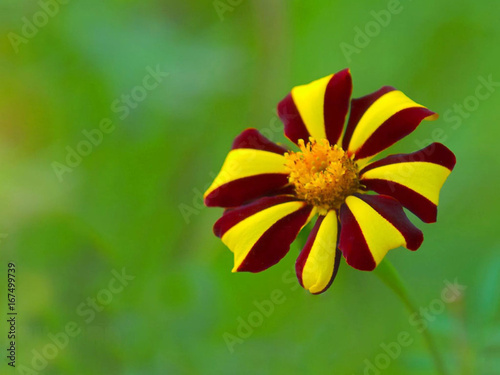 Poster Yellow & Brown Flower