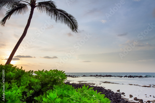 Foto op Plexiglas Tropical strand Hawaii Palm Tree Sunset
