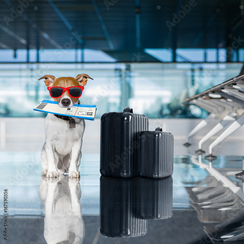 Foto op Aluminium Crazy dog dog in airport terminal on vacation