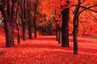 red autumn park