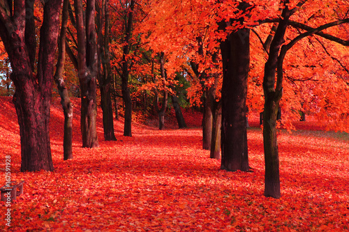 Deurstickers Koraal red autumn park