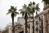 Palm trees in a street in Barcelona