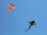 huge kites fly in the blue sky in the summer