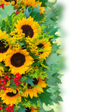 Border of sunflowers with green leaves and red berries border over white background