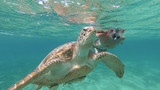 The girl is swimming next to the sea turtle. Red sea. Marsa Alam - 167624306