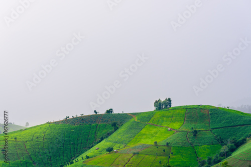 Papiers peints Les champs de riz view of green rice fields terrace mountain in countryside Land with grown plants of paddy and sea of fog at Pa Pong Piang, Thailand