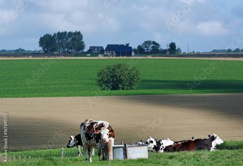 Fridge magnet Vaches de Normandie