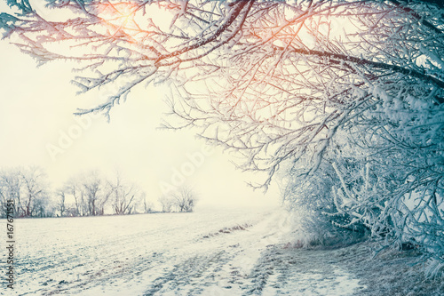 Foto op Canvas Wit Beautiful winter country landscape with snowy trees and field at sunlight, outdoor nature