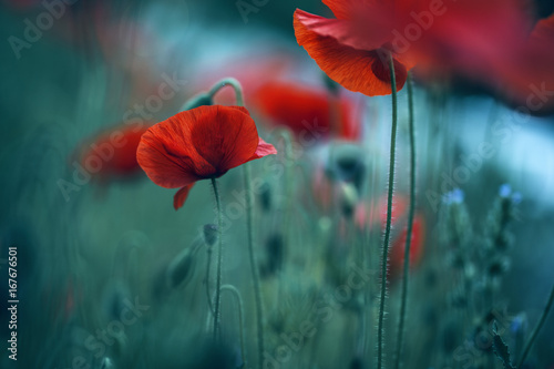 Aluminium Klaprozen Poppy Meadow