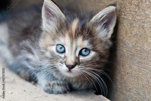 Little Kitten outdoor - Portrait of cute Cat