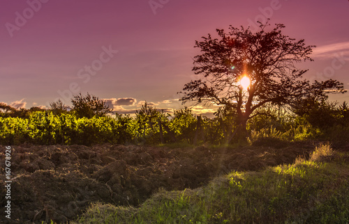 Foto op Aluminium Crimson sunset tree landscape
