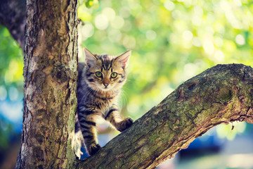 Cute little kitten sitting on a tree branch in the garden