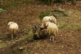 Trio de randonneurs couvert de lainage - 167688350