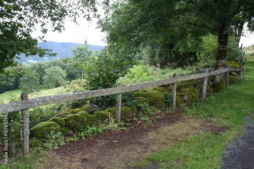 Foto op Canvas Weg in bos Ferme Auvergnate