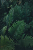 Dark Lush Foliage