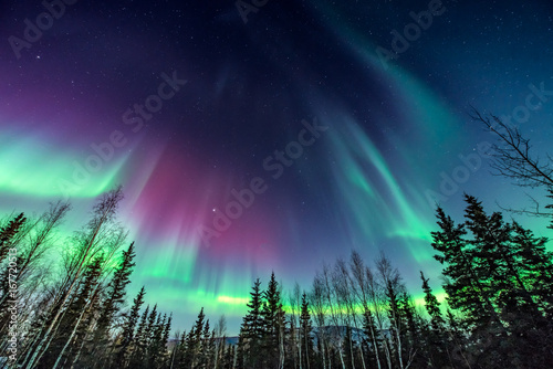 Fotobehang Noorderlicht Purple and green aurora / northern Lights over tree line