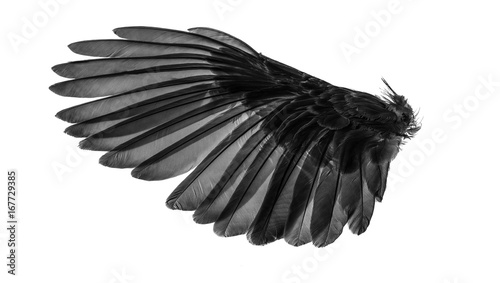 Angel wings, Natural black wing plumage with clipping part - 167729385