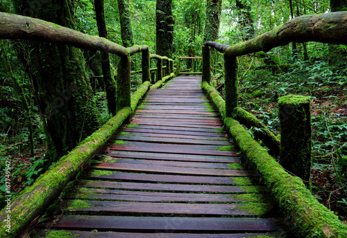 old charming wooden bridge in the forest.