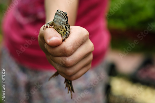 The common frog sits in a fist and looks proudly upwards