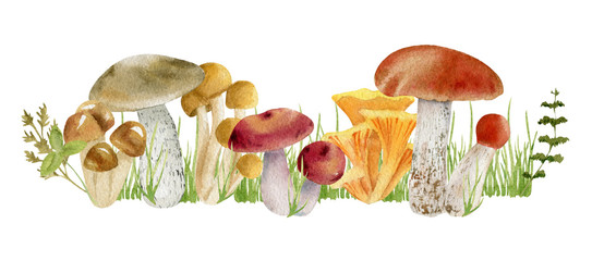 watercolor clipart of mushrooms © olesyaturchuk